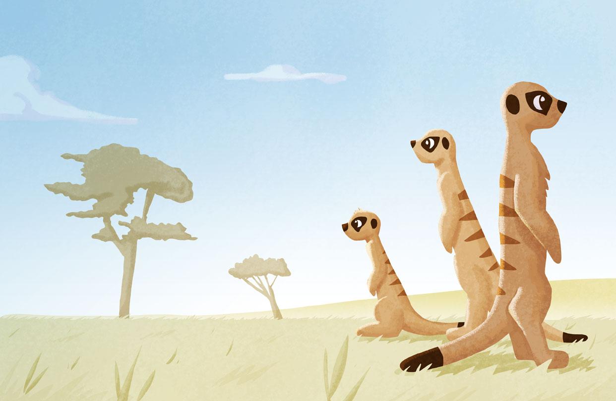Meerkat-Spread-1
