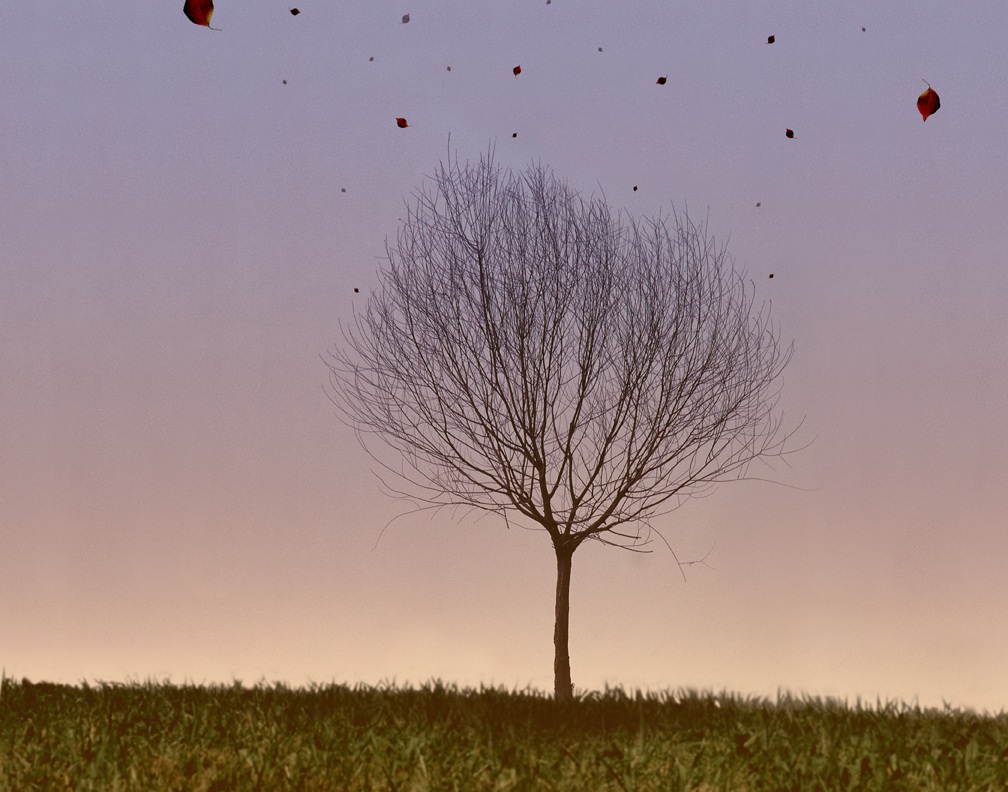 arbol-solitario